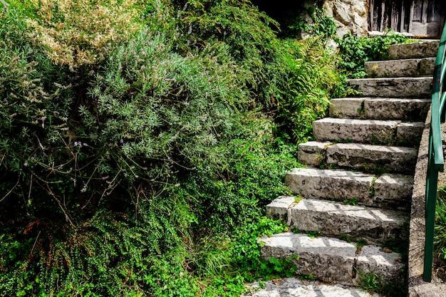 녹색 정원에서 돌 계단