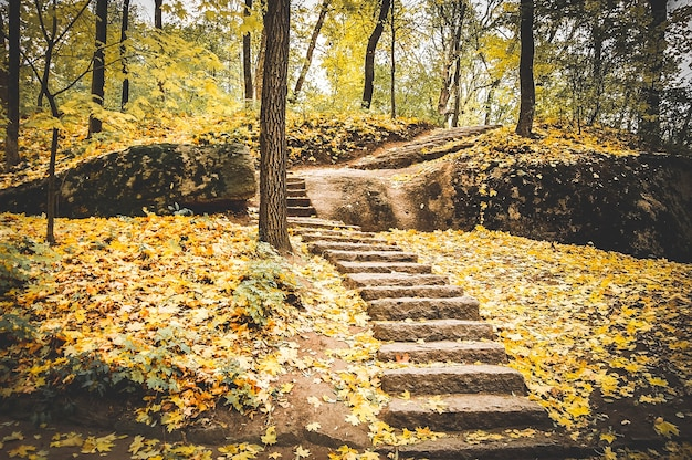 Stone staircase strewn with fallen yellow leaves in autumn park