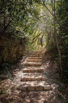 Stone stairs in a forest in mlini, croatia.