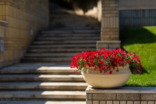 Каменная лестница в зеленом саду.
