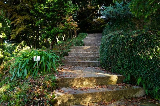 Каменная лестница тропинка среди зелени в парке