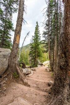 산 숲에서 돌 계단입니다. 관광 경로 풍경입니다.