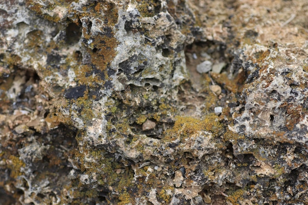 Stone surface gray uneven and moss