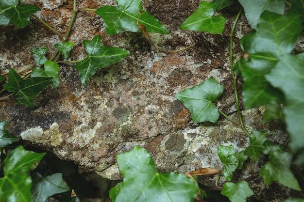 Каменная стена с зелеными листьями