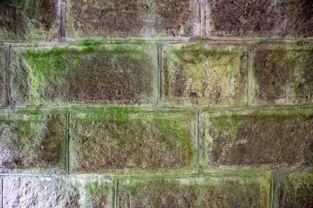 Каменная стена с зеленым мхом.
