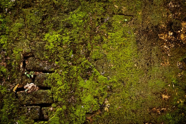 Stone wall with moss texture