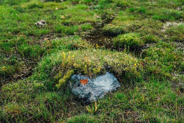 Камень с оранжевым лишайником в форме сердца среди дикой флоры высокогорья. живописная природа с пышной альпийской зеленью. яркие зеленые травы крупным планом в горах.