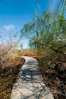 Stoned path passing through a forest, puerto baquerizo moreno, san cristobal island, galapagos islands, ecuador