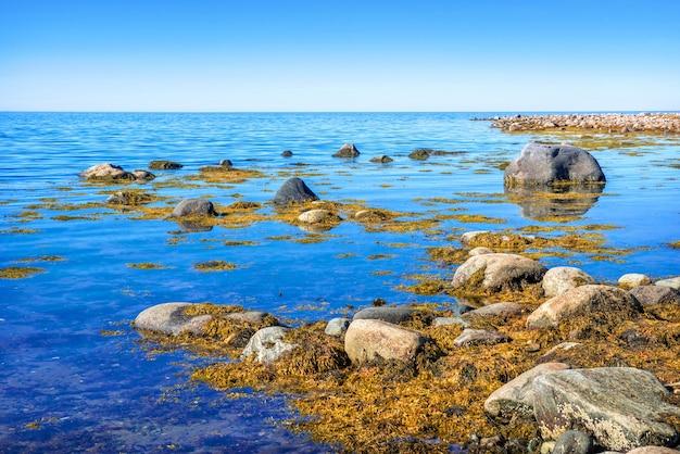 秋の太陽の光の中でソロヴェツキー諸島の白海の青い海の石と藻類