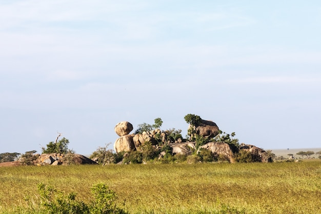 セレンゲティの果てしない平原にある石と岩。タンザニア、アフリカ