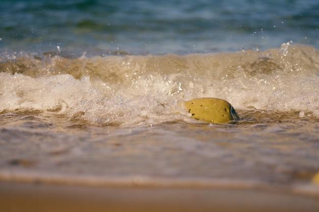 모래 열 대 해변에 거품과 돌과 파도.