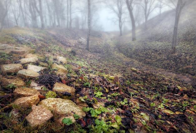 Камни на поселке труворовый в изборске (псков) и туманная даль в осенний пасмурный день