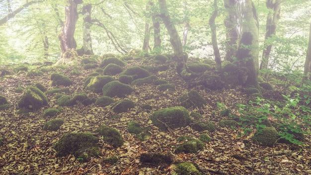 Камни, заросшие зеленым мхом в туманном лесу