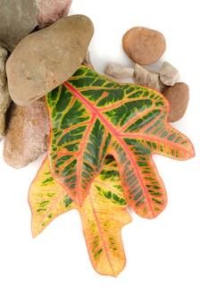 Камни с цветным листом на белом фоне