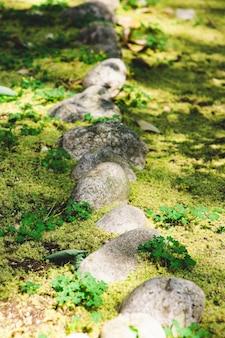 森林に苔を持つ石