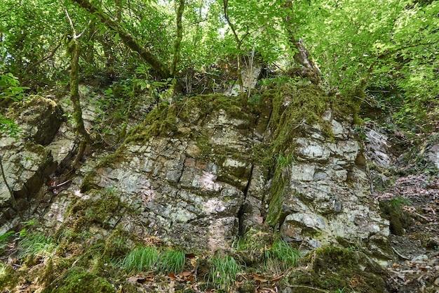 張り出した葉と緑の草のある森の石の岩壁