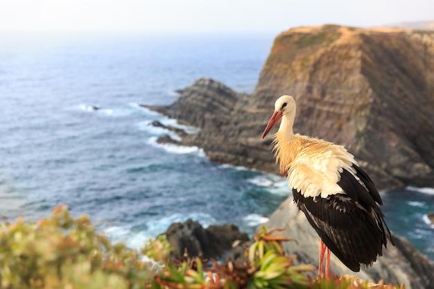 Stork on the beach