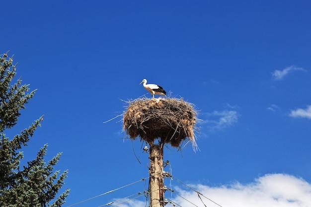 ポールの巣にいるコウノトリの鳥