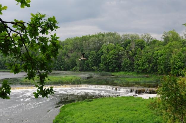 Stork flies over the rumba falls in kuldiga.