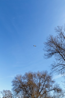 木の上を飛ぶコウノトリ