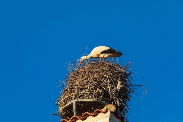 교회 지붕에 둥지에있는 황새. 화창한 날과 푸른 하늘.