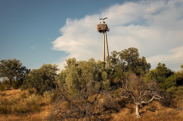 Гнездо аиста у болота алькантара