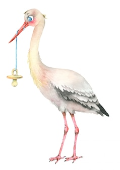 Stork with baby pacifier. watercolor illustration