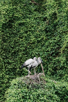 Storks on a lush nest surrounded with greenery