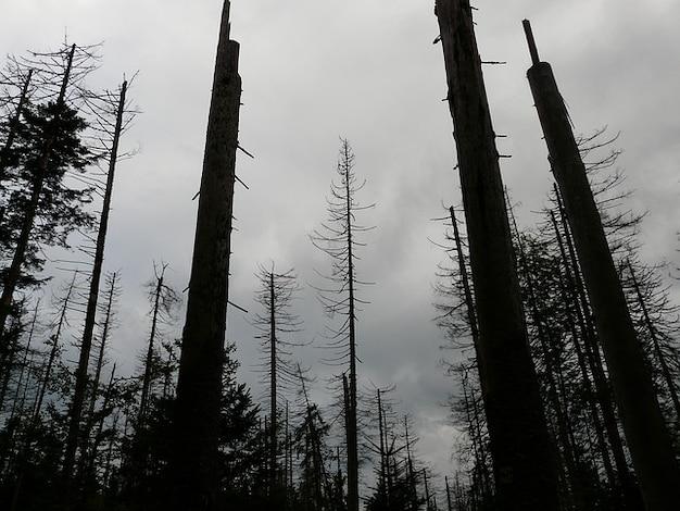 Storm wood waldsterben trees dead death