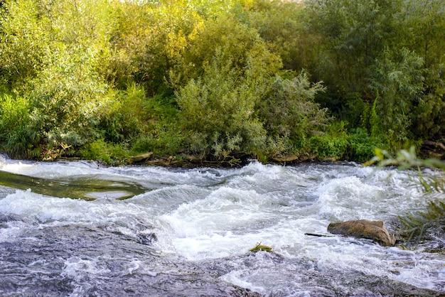 Штормовая холодная прозрачная вода горной реки с зеленым берегом летом