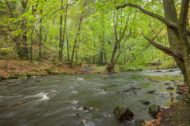 Stormy river flowing through the spring forest