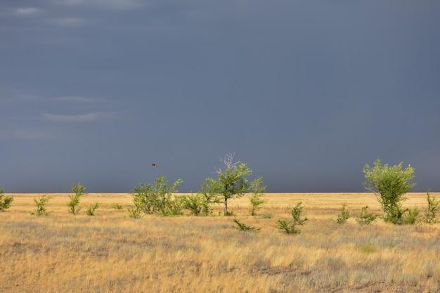 野原の嵐の空、草原の雷雨、草原の火