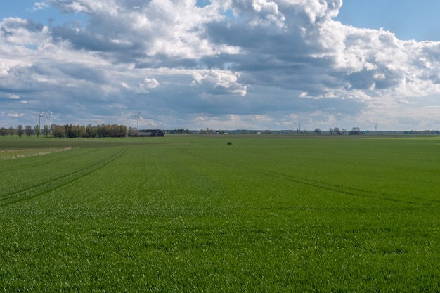 背景に風力発電がある緑の播種されたフィールド上の嵐の空。中央スウェーデン。
