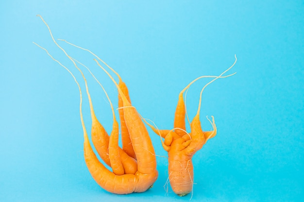 Strange funny shaped carrots on a blue space. vegetable crops concept. minimalism, copy space. ugly carrot. not like everyone else.