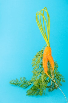 Strange funny shaped carrots on a blue space. vegetable crops concept. minimalism, copy space. ugly carrot.