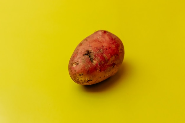 Strange ugly mutant red organic uneven potatoes with insect bites