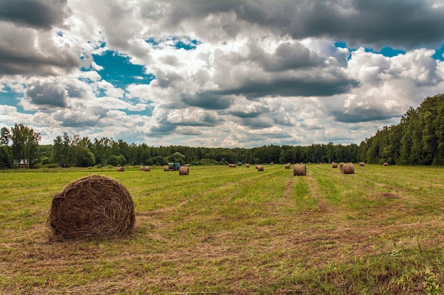 Straw bales on the field hay making