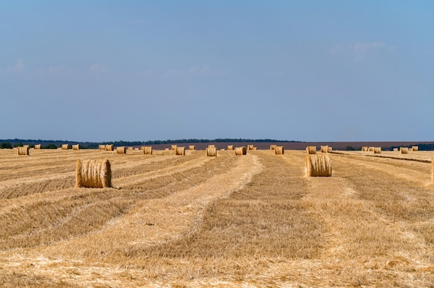 Straw bales on the field with blue cloudless sky