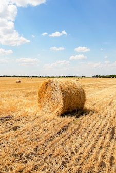 Straw bales in a field with blue sky