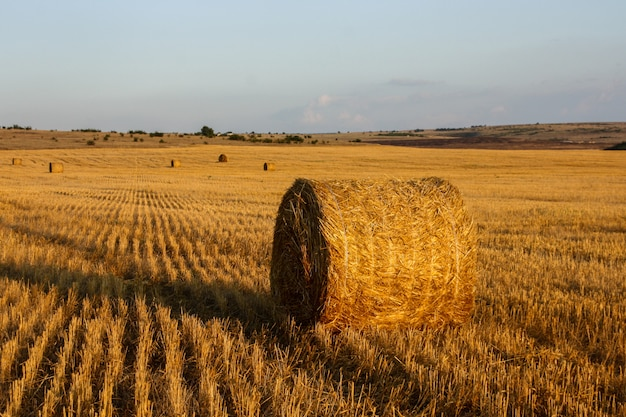 Straw bales in the golden meadow and blue clear sky at sunset.