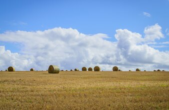 Straw bales in a field with blue and white sky in autumn