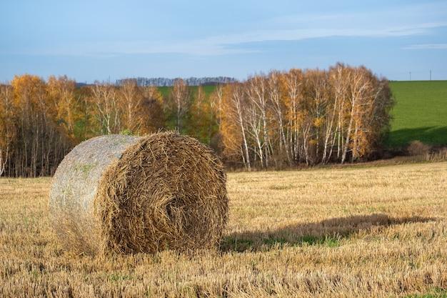 秋の畑のわら俵