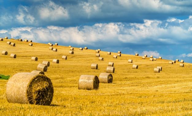 中央ヨーロッパ、スロバキアの麦畑のわら俵