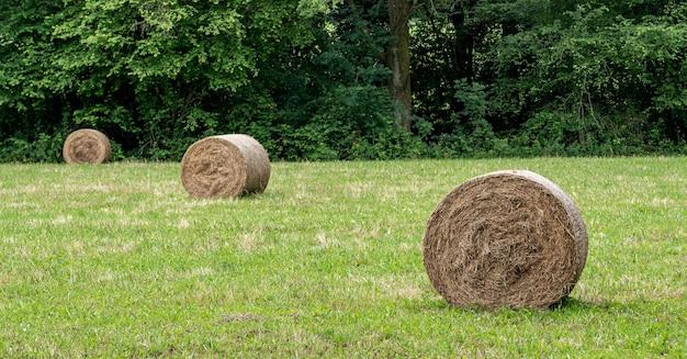 夏の農地のわら俵