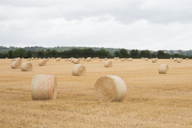 Straw bales in summer field with hay bales
