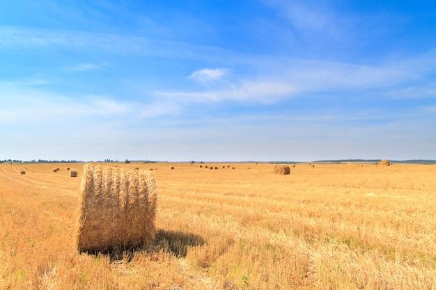 Тюки соломы ждут сбора в поле осенью под голубым облачным небом.