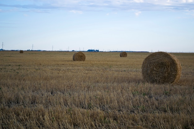 Straw bales wheat straw the bales are ready to be loaded in the field new harvest yellow straw