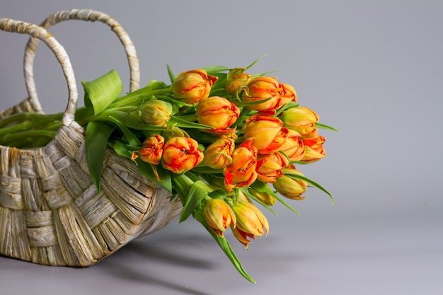 Straw basket with bouquet of fresh orange tulips , greeting or gift concept