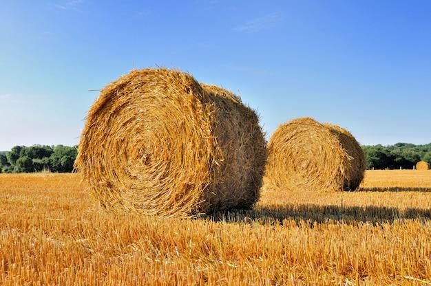 Straw in a field in summer