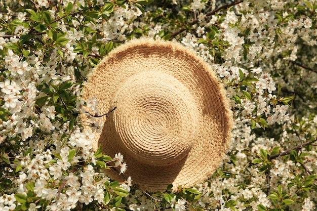 Straw hat in blooming spring tree. sunny spring day